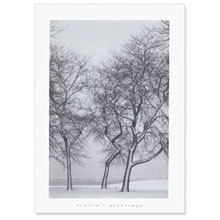 Season's Greetings Snow Blown Trees Holiday Greeting Card