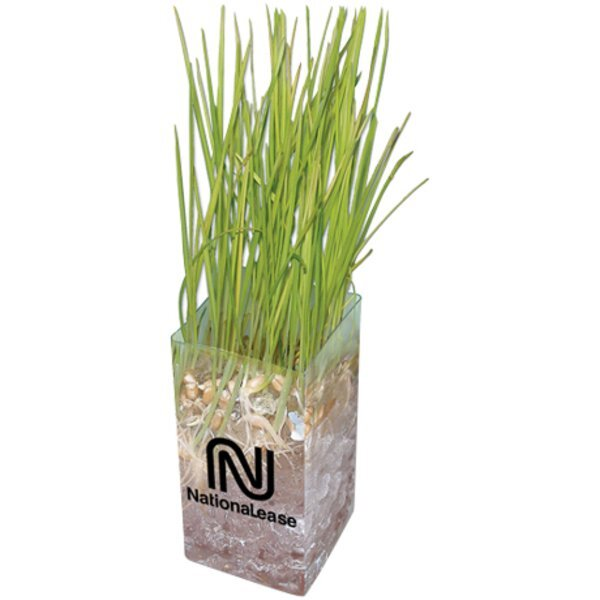Wheatgrass Grow Kit