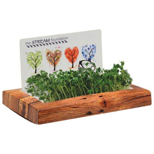 Rectangle SproutScape Desktop Garden